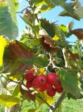 fruttirossi